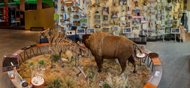 exhibit-wildlands